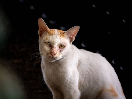 The White Stray Cat Looked with Pathetic Eyes to Ask for Food