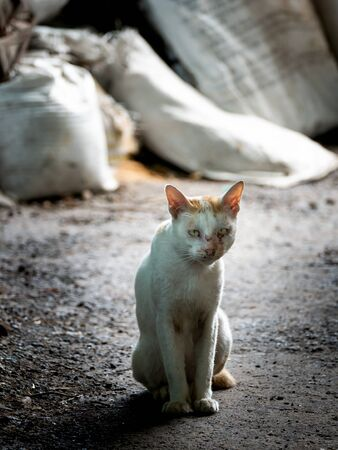 The White Stray Cat Looking with Pathetic Eyes and Sitting on The Ground Foto de archivo