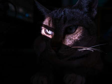 Sun Light Passes only The Cat's Eye Secretly in The Room