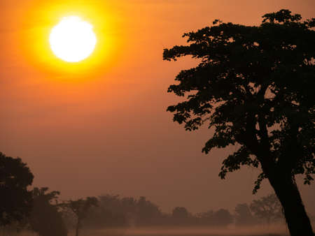 The Fog Covering The Silhouette Trees on The Dry Rice Fields behind The Sun in The Morning