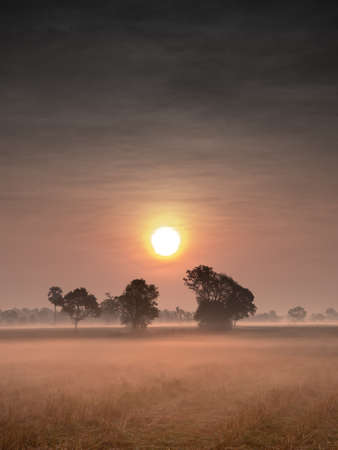The Fog Covering on The Dry Rice Fields behind The Sun in The Morning
