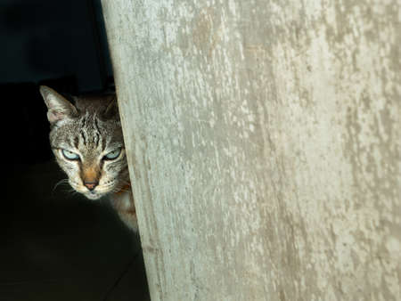 The Tabby Cat Stared at The Camera Secretly behind The Old Door