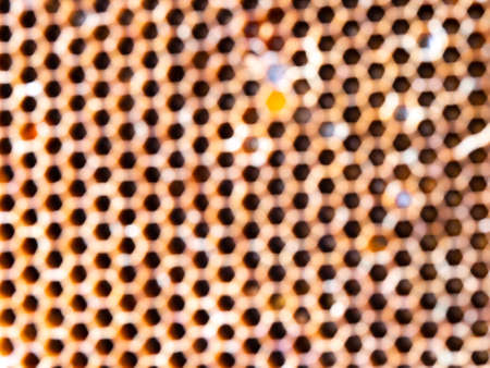 The Blur of Circle from The Wild Honeycomb in The Garden