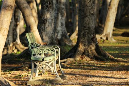 숲의 햇빛 아래에서 외로운 의자