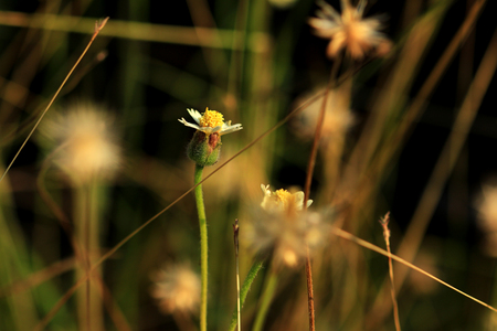 따뜻한 햇살 아래 코트 단추 꽃