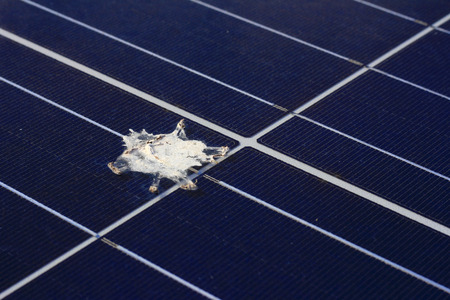 Bird Shit on Solar Panel Surface Imagens