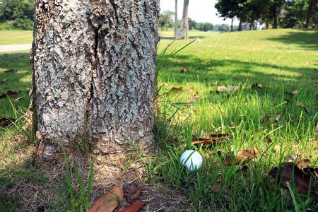 나무 바닥에 골프 공