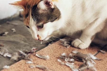 새를 먹는 고양이