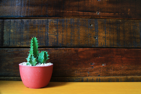 Little Cactus Wooden Background with Space for Text