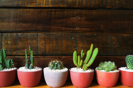 Several Little Cacti Wooden Background with Space for Text 스톡 콘텐츠