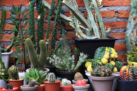 Several Types of Cacti Red Brick Background 스톡 콘텐츠
