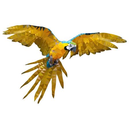 guacamaya: volar guacamayo loros