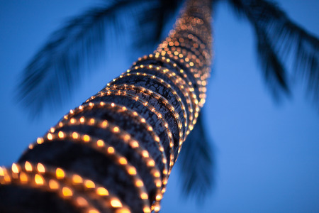 Coconut tree decorated with LED light bulbs shot after sunset against dark blue sky  photo