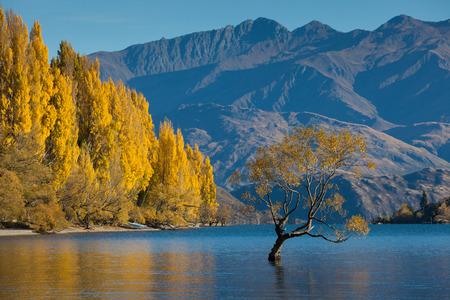 Lake Wanaka in autumn colors , Glendhu Bay , south island, New Zealand photo