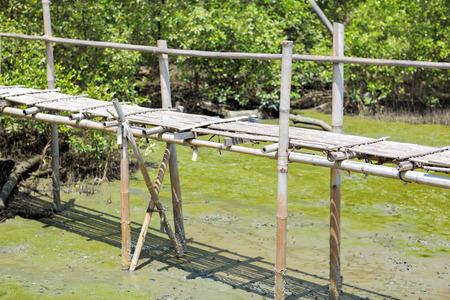 Bamboo bridge in mangrove forest photo