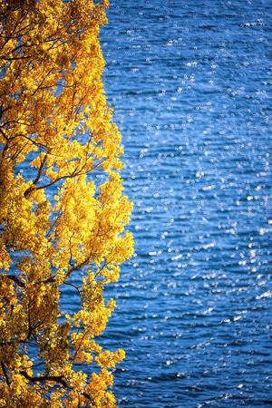 Autumn tree by the lake, New Zealand photo