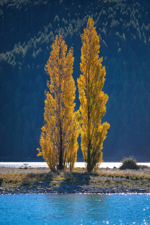 tekapo: Color of Autumn at lake Tekapo