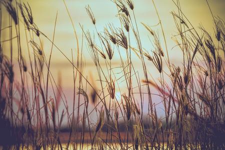 urban colors: Flor silvestre con los �ltimos rayos de sol en el fondo Foto de archivo