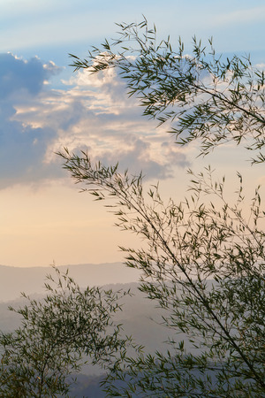 Silhouette of bamboo trees with cloudscape and mountain range in the distance photo
