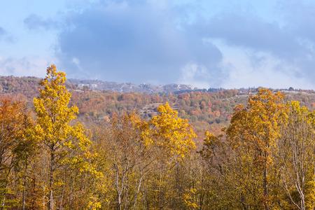 brilliant colors: Brilliant colors on a sunny autumn day