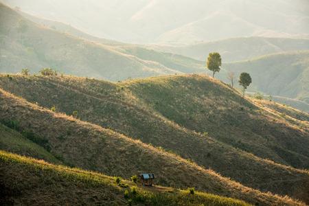Farmland in countryside on extream terrain, Nan province, Thailand photo