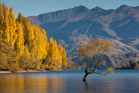 秋の色、Glendhu 湾、南の島、ニュージーランドのワナカ湖