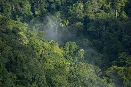 bird eye: Tropical rain forest from bird eye view Khoyai Thailand