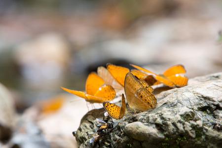 rock creek: Colorful butterflies on rock along the creek