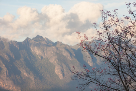 dao: Cherry blossom with Chiang Dao mountain in the background. Stock Photo