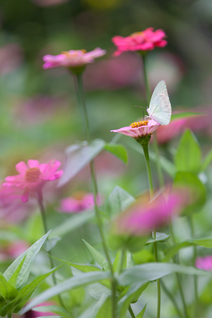 pink flower: Butterfly in a garden full of colorful flowers