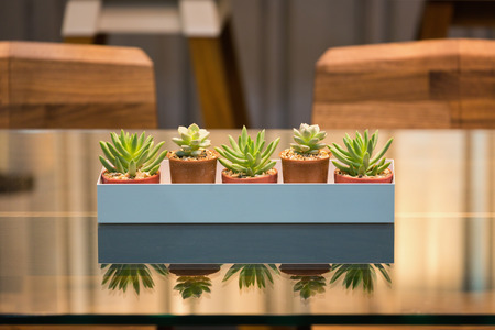 Row of cactus and succulent in a wooden rack decorated on top of a grass table.