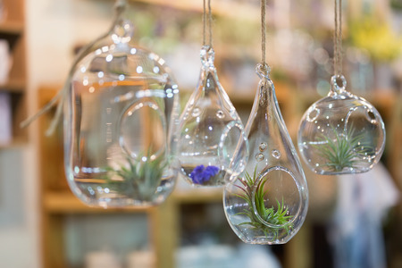 DIY tiny hanging glass flower pot with wooden shelves on wall. Stock Photo