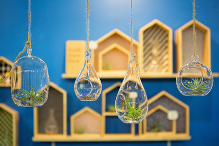 DIY tiny hanging glass flower pot with wooden shelves on blue wall.
