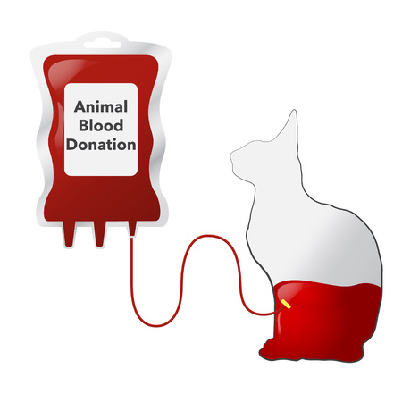 transfuse: Animal blood donation concept with dripper and cat, vector illustration Illustration