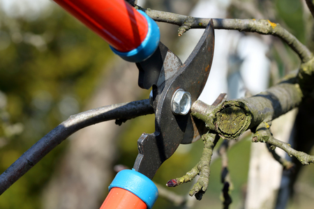 machinery space: Pruning shears in the garden in early spring