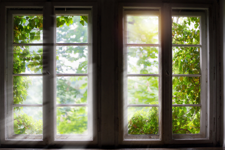 garden frame: Green plant against window with sun rays