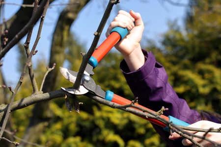 Woman pruning shears in the garden in early spring and empty space for text Banque d'images