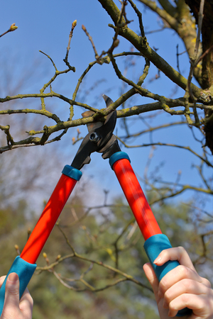 Woman pruning shears in the garden in early spring and empty space for text Stockfoto