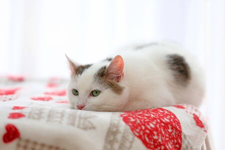 Young white cat closeup portrait with empty space for text