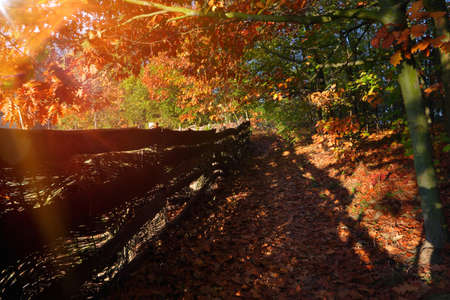 Autumn view: path in the forest along the fence and sunset and empty space for text