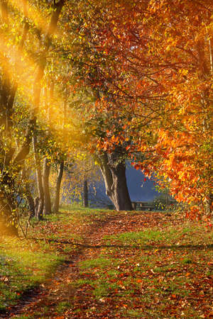Autumn view: path among trees with afternoon sun and empty space for text