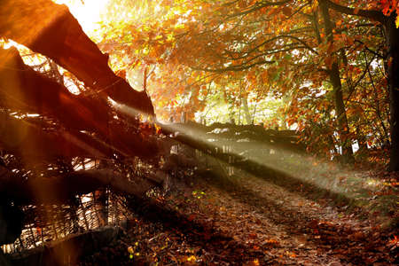 Autumn view: road in the forest along the fence and sunset and empty space for text