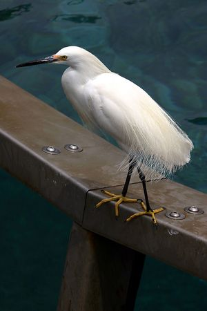 수영장의 금속 난간에 서있는 흰 새