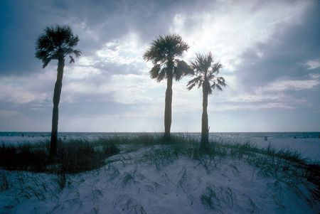 three palm trees: Three palm trees on Florida beach with sunset in background
