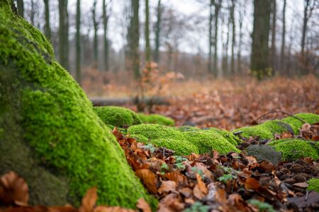 green mossy tree in front of blurred forest