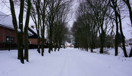 A road in a snow covered rural village in Germany. Leafless deciduous trees at both sides of the road.