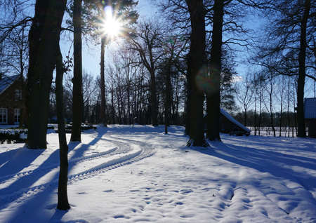 Winter landscape. Traces of a tractor can be seen in the snow. Bare deciduous trees. Blue sky with a sharp winter sun like a star. Lens flare.
