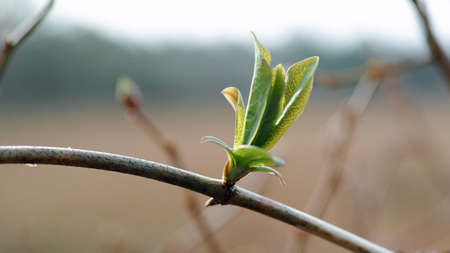 First signs of spring in the Netherlands. The branches are routing