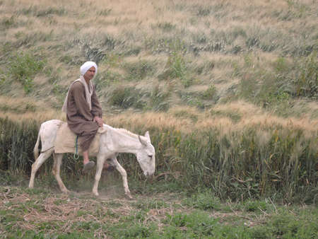 Nile, Egypt - March 28, 2015. A man in traditional Egyptian clothes riding on his white donkey. A white turban, a brown jellabiya (jalabiya, or galabeya) and slippers. Editorial