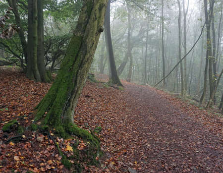 Lovely hiking trail in the early morning mist. The forest is magical. Autumn leaves on the ground. It feels like walking in a fairy tale. Location: Wittekindsweg, Porta Westfalica, NRW